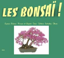 Les bonsai